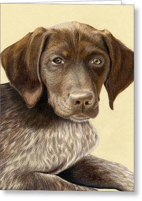 Puppies Drawings Greeting Cards - German Shorthaired Pointer Greeting Card by Heather Mitchell