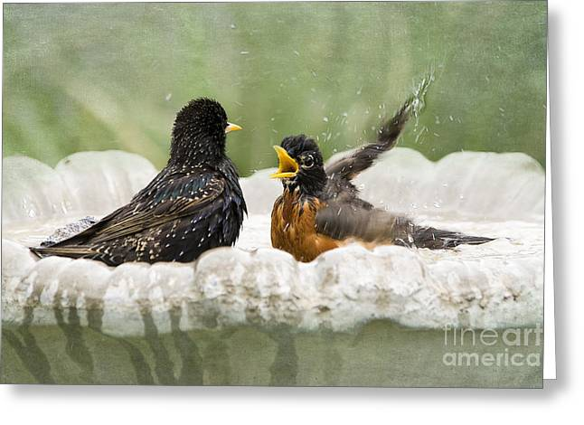 American Robin Greeting Cards - Get Out of My Bath Greeting Card by Betty LaRue