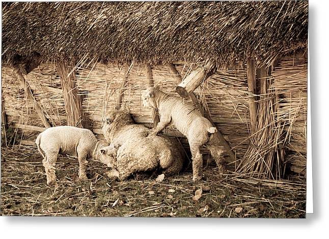 Thatch Greeting Cards - Get up Mum Greeting Card by Dawn OConnor