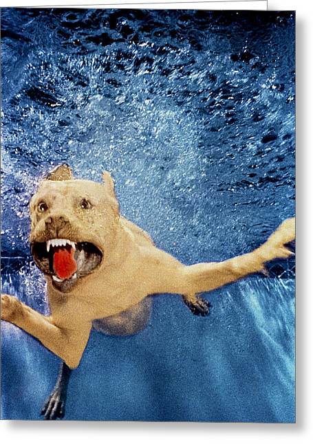 Underwater Dog Greeting Cards - Getting Closer Greeting Card by Jill Reger