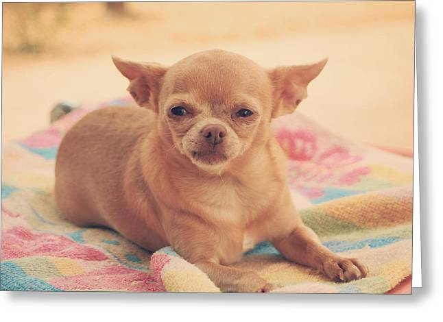 Tiny Dogs Greeting Cards - Getting Sleepy Greeting Card by Laurie Search