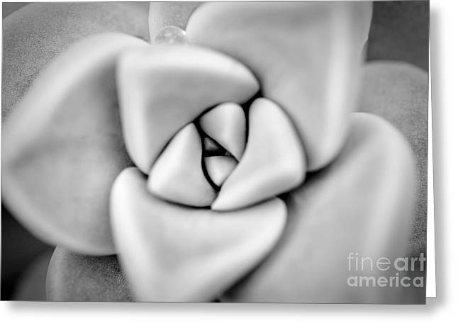 Ghost Petals Greeting Card by Pixel Perfect by Michael Moore
