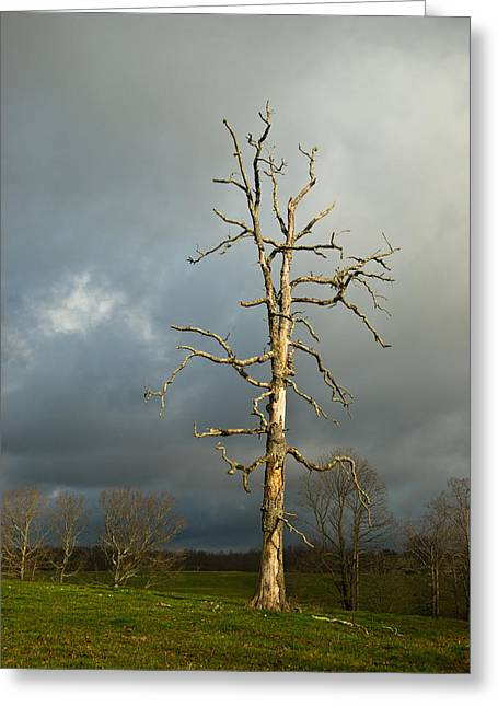 Ghastly Greeting Cards - Ghost Tree Greeting Card by Douglas Barnett