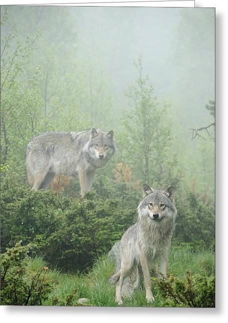 Wolf Face Greeting Cards - Ghosts of the forest Greeting Card by Andy-Kim Moeller