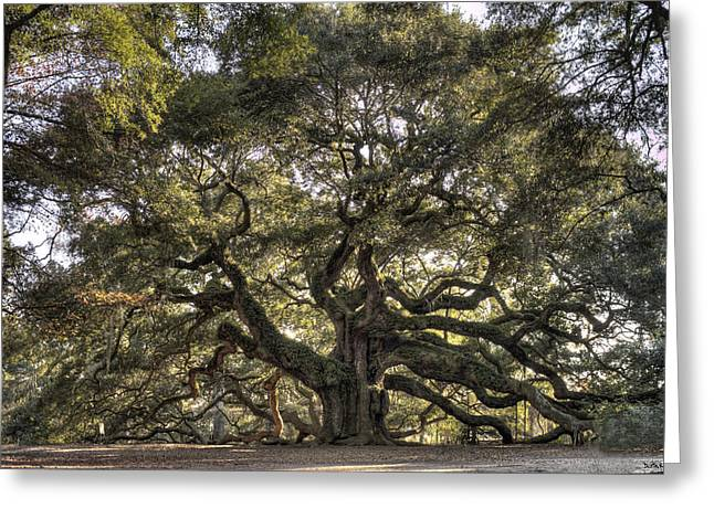 Charleston Greeting Cards - Giant Angel Oak Tree Charleston SC Greeting Card by Dustin K Ryan