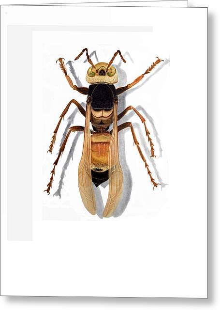 Giant Asian Hornet Greeting Card by Inger Hutton