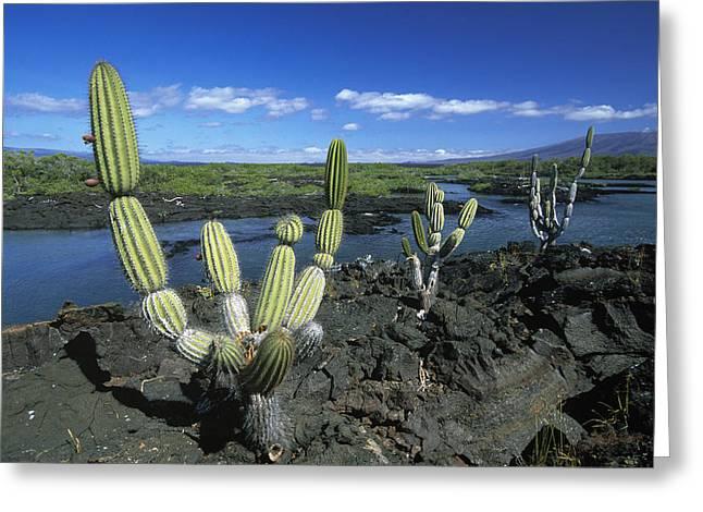 Giant Candelabra Cactus Jasminocereus Greeting Card by Winfried Wisniewski