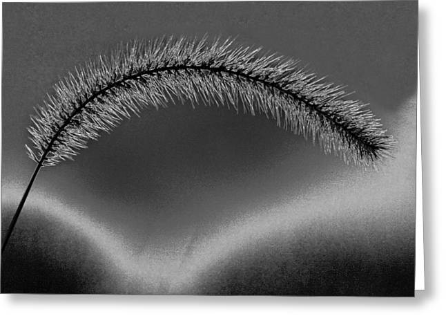 Concept Photographs Greeting Cards - Giant Foxtail in Monochrome Greeting Card by Jim Finch