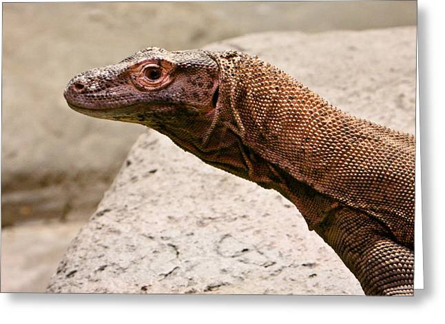 Goanna Greeting Cards - Giant Monitor Lizard 2 Greeting Card by Douglas Barnett