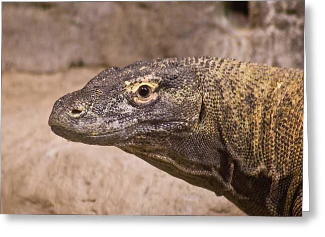 Goanna Greeting Cards - Giant Monitor Lizard Greeting Card by Douglas Barnett