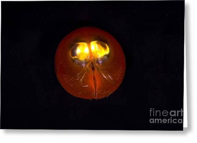 Deepsea Greeting Cards - Giant Ostracod Greeting Card by Dante Fenolio