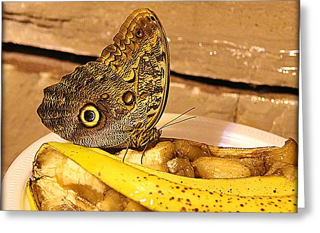 Brown Photographs Greeting Cards - Giant Owl Butterfly on Fruit Greeting Card by Tam Graff