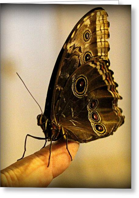 Brown Photographs Greeting Cards - Giant Owl Butterfly On My Finger Greeting Card by Tam Graff