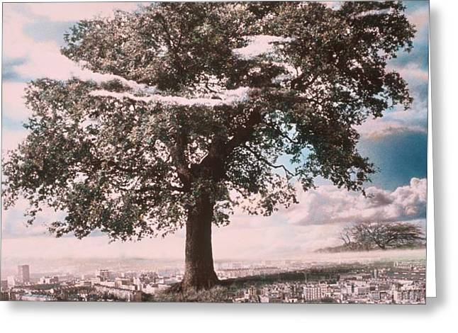 Giant Tree in City Greeting Card by Hag