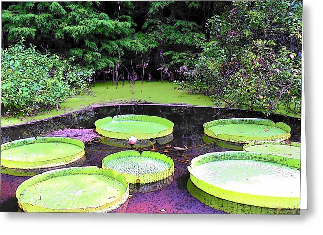 Amazon Greeting Card Greeting Cards - Giant Victoria Water Platter Greeting Card by Sheri McLeroy