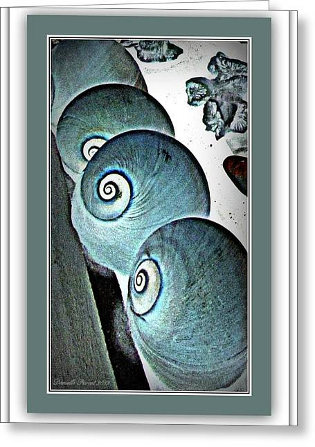 Sea Life Framed Prints Greeting Cards - Gifts Of Saphires  Greeting Card by Danielle  Parent