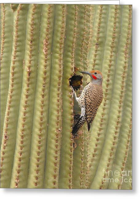 Photos Of Birds Greeting Cards - Gilded Flicker Greeting Card by Rebecca Margraf