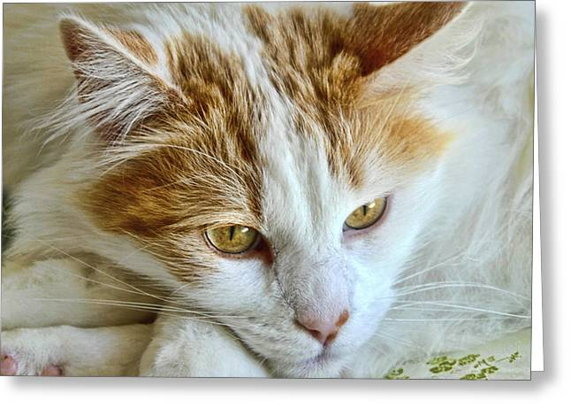 Ginger Greeting Card by Imagevixen Photography
