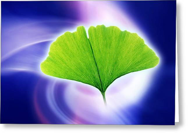 Ginkgo Leaf Greeting Card by Pasieka