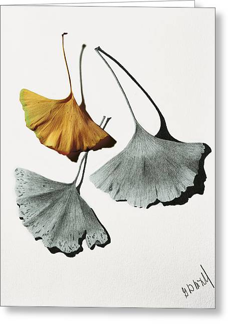 Photo-realism Mixed Media Greeting Cards - Ginkgo Leaves Greeting Card by Garry McMichael