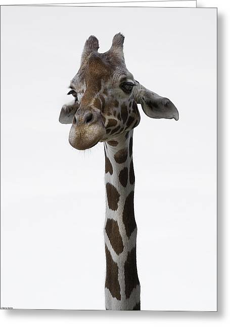 Barry Styles Greeting Cards - Giraffe 4 Greeting Card by Barry Styles