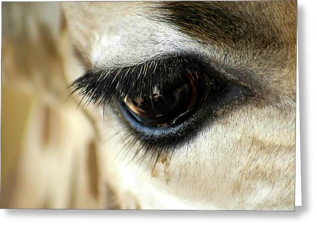Eyelash Greeting Cards - Giraffe Eye Reflection Greeting Card by Carolyn Marshall