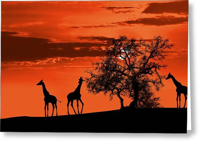 Africa Digital Art Greeting Cards - Giraffes at sunset Greeting Card by Jaroslaw Grudzinski