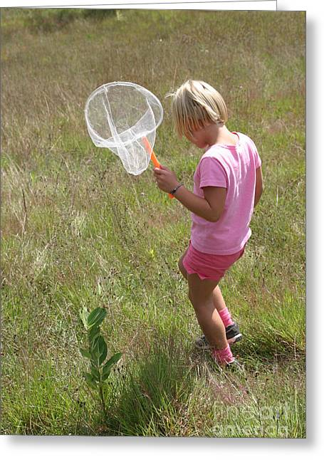 Netting Greeting Cards - Girl Collecting Insects In A Meadow Greeting Card by Ted Kinsman