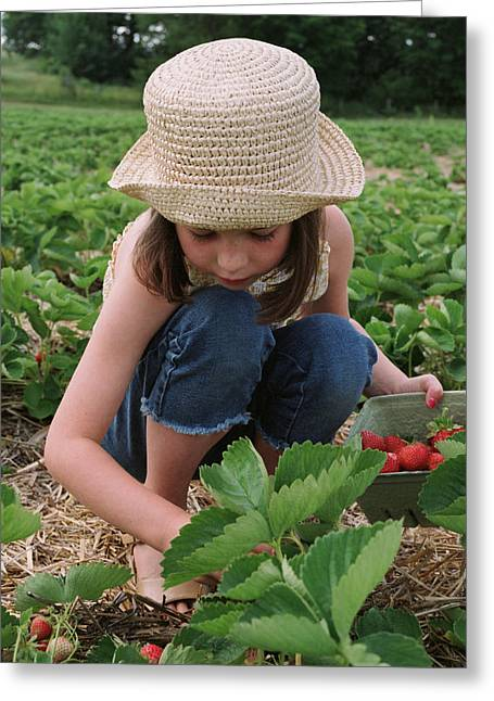 Entire Greeting Cards - Girl Picking Strawberries Greeting Card by Michelle Quance