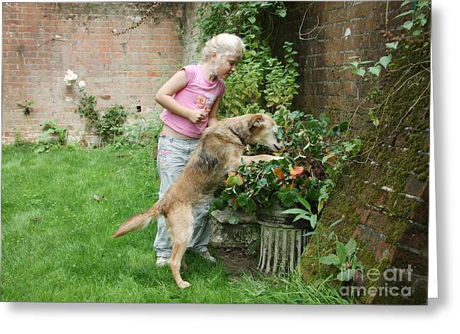 Home Owner Greeting Cards - Girl Playing With Dog Greeting Card by Mark Taylor