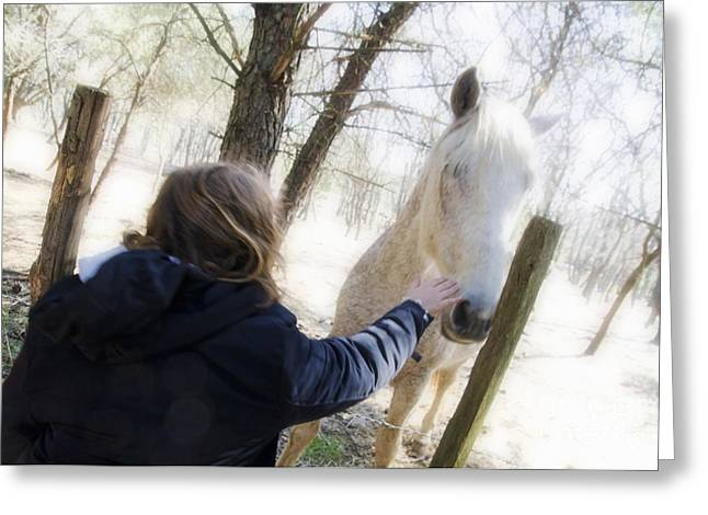 Children Only Greeting Cards - Girl stroking camargue horse at fence Greeting Card by Sami Sarkis
