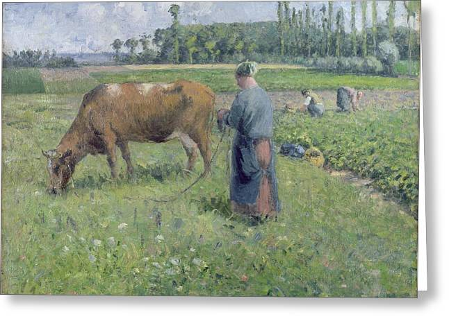 Farming Greeting Cards - Girl Tending a Cow in Pasture Greeting Card by Camille Pissarro