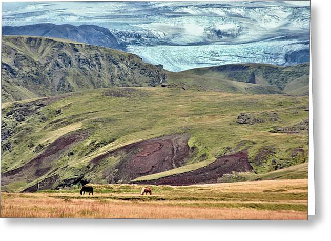 Glacier mountains meadows horses Greeting Card by David Halperin