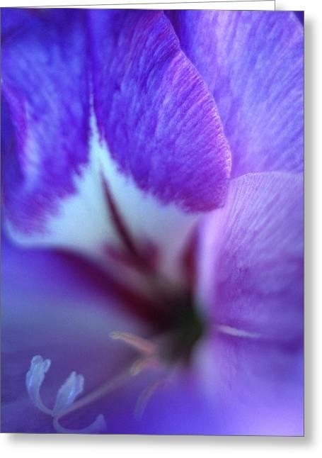 Gladiolas Greeting Cards - Gladiola Close-up Greeting Card by Kathy Yates