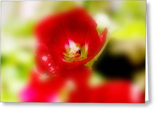 Gladiolus Greeting Card by Toni Hopper