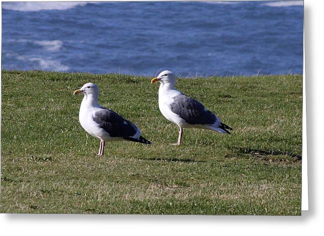 Best Sellers -  - State Parks In Oregon Greeting Cards - Glaucous Winged Gull - 0001 Greeting Card by S and S Photo