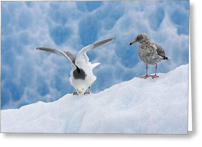 Us Open Photographs Greeting Cards - Glaucous-winged Gull Larus Glaucescens Greeting Card by Konrad Wothe