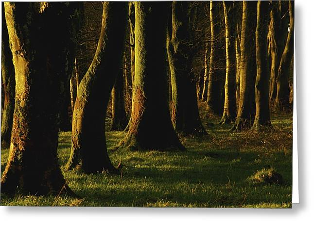 Forest Floor Greeting Cards - Glenville Woods, County Cork, Ireland Greeting Card by Richard Cummins