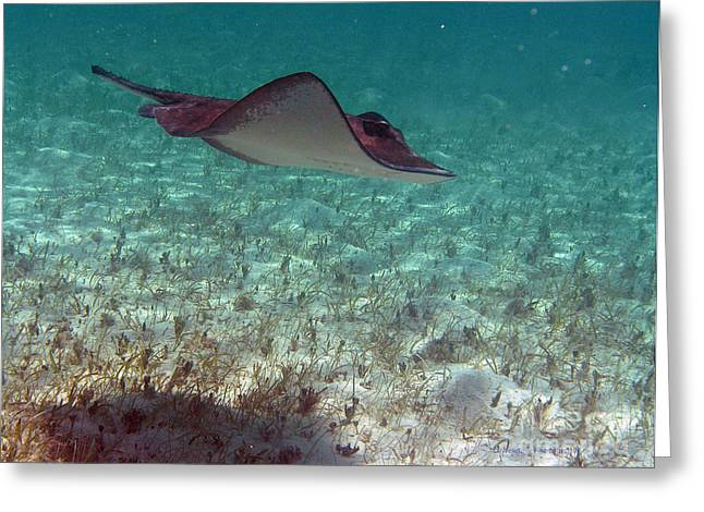 Undersea Photography Greeting Cards - Glide Greeting Card by Li Newton