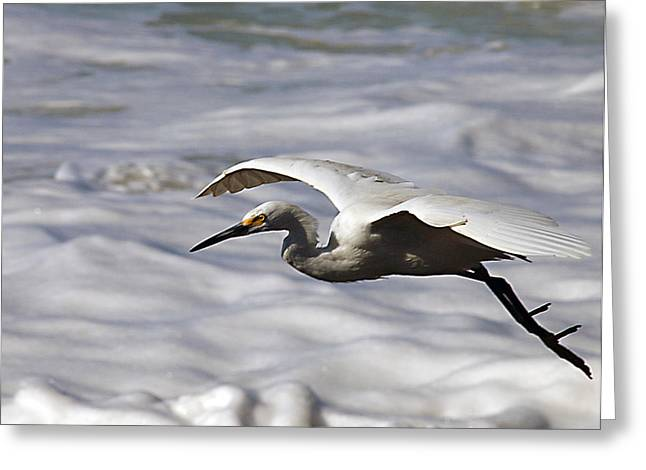 Gliding Egret Greeting Card by Joe Schofield
