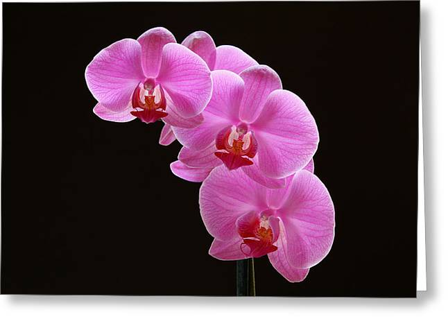 Orchid Canvas Greeting Cards - Glorious Pink Orchids Greeting Card by Juergen Roth