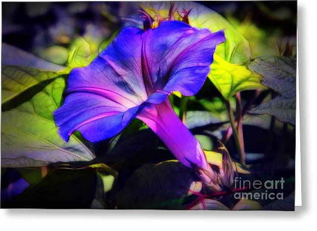 Glory Of The Morning Greeting Card by Judi Bagwell