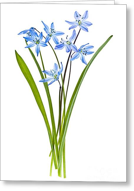Flower Arranging Greeting Cards - Blue spring flowers Greeting Card by Elena Elisseeva