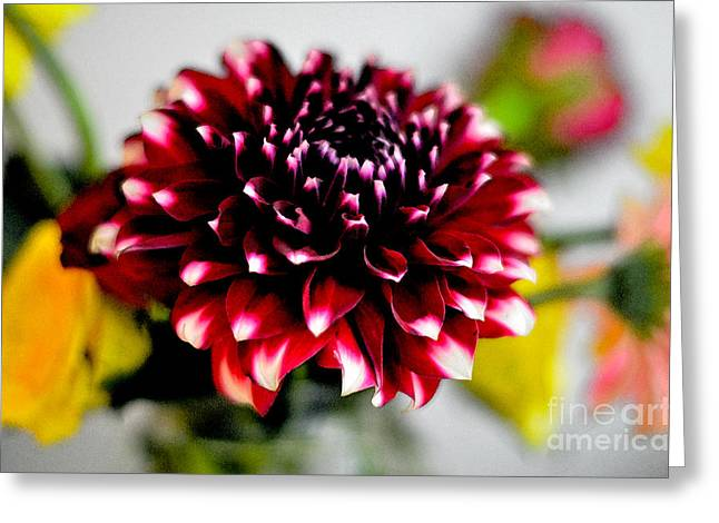 Glowing Dahlia Greeting Card by Pravine Chester