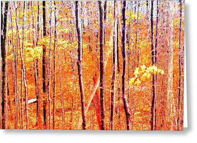 Autum Abstract Greeting Cards - Glowing Forest  Greeting Card by Lyle Crump