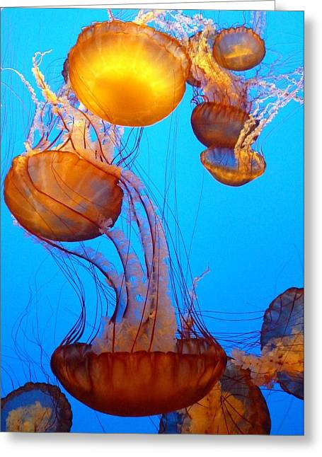 Jelly Fish Greeting Cards - Glowing Jellyfish Greeting Card by Carla Parris