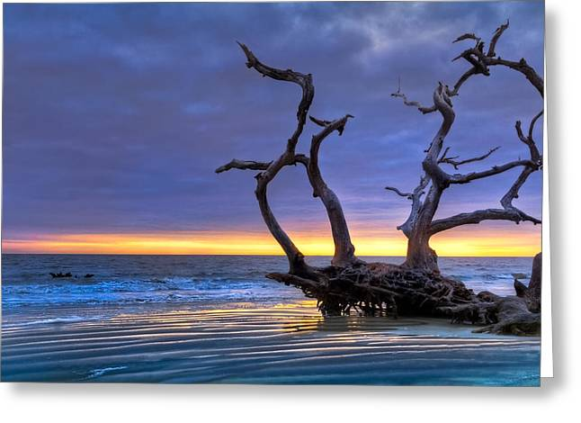 Tidal Photographs Greeting Cards - Glowing Sands at Driftwood Beach Greeting Card by Debra and Dave Vanderlaan