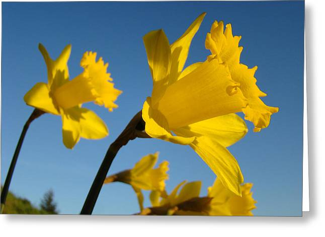 Glowing Yellow Daffodil Flowers art prints Spring Greeting Card by Baslee Troutman