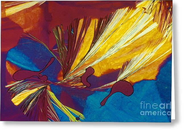 Glycine Greeting Card by Michael W. Davidson