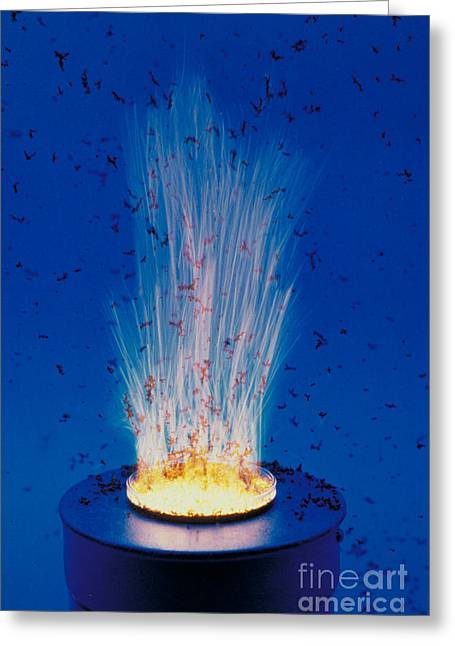 Ignition Greeting Cards - Glycine Nitrate Process Greeting Card by DOE/Science Source